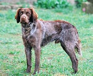 French Dog Breeds Large