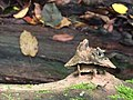 Eroded tree stump.jpg