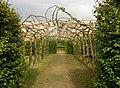 Espalier fruit trees, Temple Newsam Park, Colton - geograph.org.uk - 263660.jpg