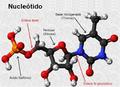 Estructura de un nucleótido.png