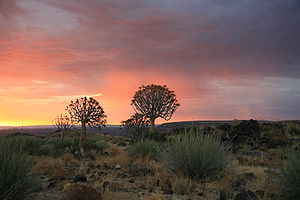 Trees with Sunset - Namibia