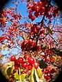 Fall (10653309516).jpg