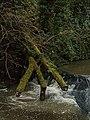 Fallen Tree Trunk (24002573382).jpg