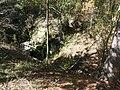 Falling Waters SP Waterfall 19 November 2020 - far.jpg