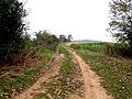 Farm track at Claxby St Andrew - geograph.org.uk - 595839.jpg