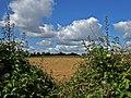 Farmland near Trip's Farm - geograph.org.uk - 560036.jpg