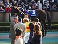 February stakes paddock - フェブラリーステークス パドック (46208106935).jpg
