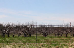 Agricultural fencing - Chain link fence with barbed wire on top.