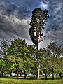 Fenerbahce Park 05414 tree.jpg