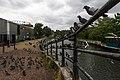 Feral pigeons in London.jpg