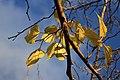 Feuilles d'automne (6901681153).jpg