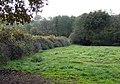 Field by Moor Brook, Shropshire - geograph.org.uk - 606430.jpg