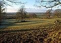 Field near Horton Hill - geograph.org.uk - 1659820.jpg