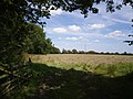 Field near Thornbury - geograph.org.uk - 512711.jpg