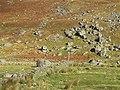 Fields, Conichan - geograph.org.uk - 598166.jpg