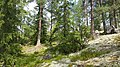 Finnish Summer, in a Natural State - panoramio.jpg