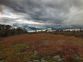 Flickr - Nicholas T - Seven Pines Mountain Hike (1).jpg