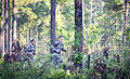 Flickr - The U.S. Army - 2010 Best Ranger Competition (6).jpg