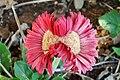 Flower-Mutant-1145.jpg