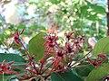 Flower - panoramio - collage bird's eye v….jpg