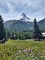 Flower Meadow and the Matterhorn.jpg