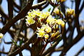 Flowers (3650745852).jpg