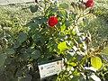 Flowers - Fiori (16904066073).jpg