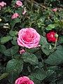 Flowers - Uncategorised Garden plants 203.JPG