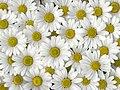 Flowers 247.jpg