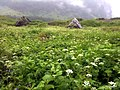 Flowers everywhere - panoramio.jpg
