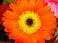 Flowers of Iran گلهای ایران 17.jpg