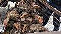 Foie gras śledztwo na Ukrainie (46469627855).jpg