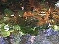 Folhas debaixo de água na Penha, Guimarães.jpg
