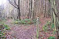 Footpath junction on the High Weald Landscape Trail - geograph.org.uk - 1593496.jpg