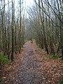 Footpath through Milldown Wood - geograph.org.uk - 335189.jpg