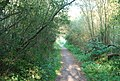 Footpath through the woods, east of Canterbury - geograph.org.uk - 984538.jpg