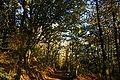Forêt de la Charnie à Viviers.JPG