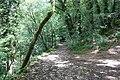 Forest @ Roc de Chère @ Talloires (35515481321).jpg