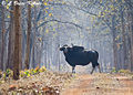 Forest Baisann.jpg
