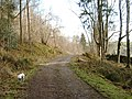 Forest Road, Tynron - geograph.org.uk - 706842.jpg