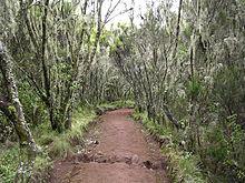 220px-Forest_in_Marangu_route_in_Kiliman