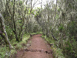 Forest in Marangu route in Kilimanjaro area 001.JPG