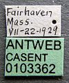 Formica impexa casent0103362 label 1.jpg