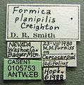 Formica planipilis casent0105753 label 1.jpg
