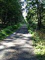 Forstweg Baunsberg.JPG