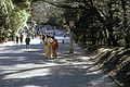 Found Photo - Japan - Tokyo - Meiji Jingu 2.tif (33686107005).jpg