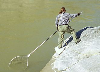Hand net - Fishing for salmon with a hand or dip net on the Fraser River, Canada
