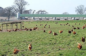 English: Free Range Poultry and Shed, near Sei...