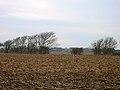 Frozen field near Hale Farm - geograph.org.uk - 97238.jpg