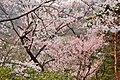 Fukushima (3823322895).jpg
